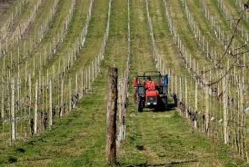 """Granda in azione: """"Agricoltura settore importante, Protopapa intervenga"""""""