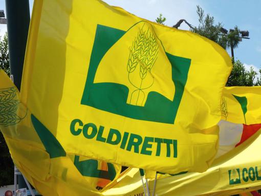 Lavoro minorile, Coldiretti Cuneo: stop import da Paesi che non rispettano i bambini