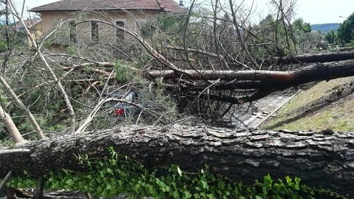 Frane, alberi e tralicci caduti, ingenti danni all'agricoltura e alla rete viaria: il Piemonte chiede lo stato di calamità