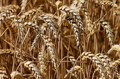 """Confagricoltura: """"Agroalimentare piemontese in forte difficoltà, la Regione ci aiuti"""""""