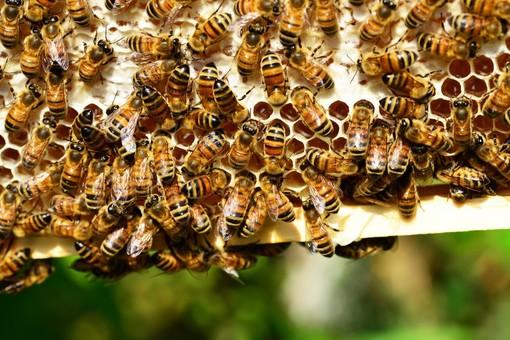 Sommariva del Bosco presenta Monsù Ghërbin e tòta Regina, maschere che celebrano il miele e le api