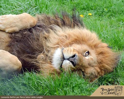 Il Parco Safari delle Langhe riapre i battenti. Sino a fine anno ingresso gratuito per medici e personale sanitario
