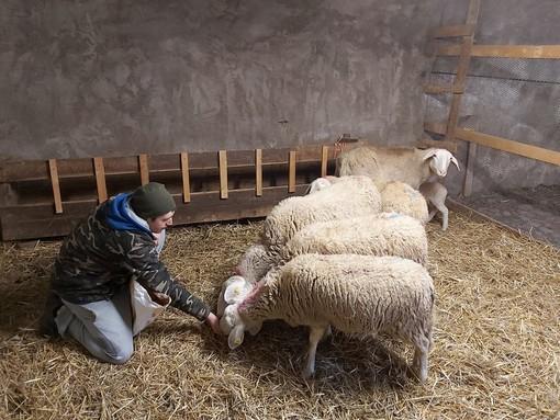 La scelta di Enrico, che a 20 anni decide di allevare pecore sambucane a Vinadio