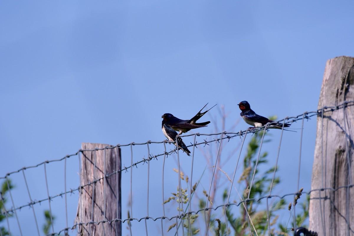 Nido Di Tortore Sul Balcone iorestoacasa: birdwatching dal balcone, dal terrazzo o nel