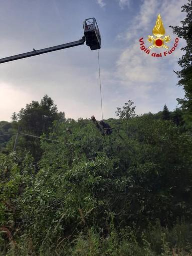 Albero di noce cade su palo Telecom, vigili del fuoco a Valloriate