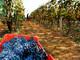 Coldiretti Piemonte: annata influenzata dal maltempo ma con ottima qualità