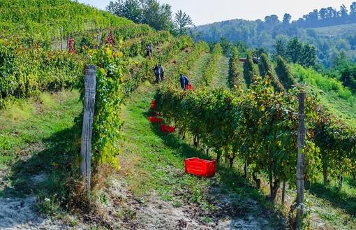 Piemonte, prorogate al 2022 alcune scadenze per il settore vitivinicolo